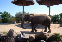 Toronto Attractions - Toronto Zoo