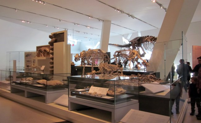 Royal Ontario Museum Rom Toronto Exhibits Tickets
