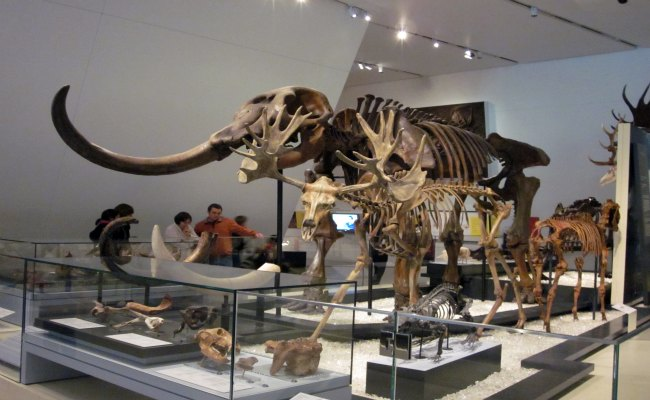 Top Toronto Attractions - Royal Ontario Museum