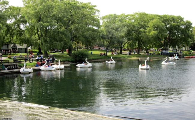 Toronto Islands - Swan Ride, Centreville Amusement Park