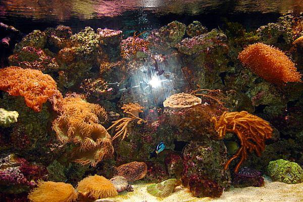 Toronto Zoo - Live Coral